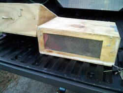 Honey Bee Removal Free Swarm Removal